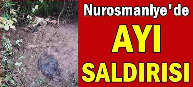 Nurosmaniye'de Yine Ayı Saldırısı