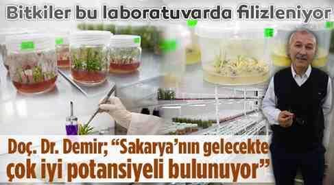 Bitkiler, Geleneksel yöntemle çoğalıyor