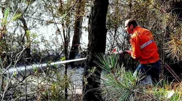 Kasım Ayında Orman Yangını