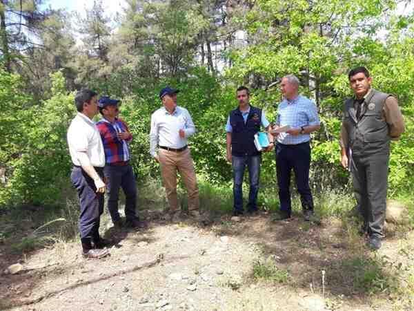 Geyve Ormanlarında Endüstriyel Ağaçlandırmaya Uygun Saha Tespiti