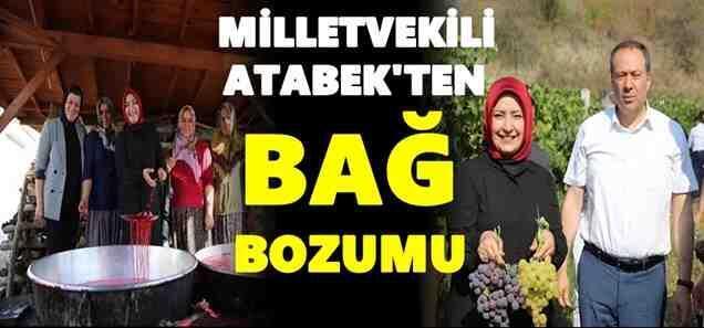 Milletvekili Atabek, Geyve'de Bağ Bozumu yaptı
