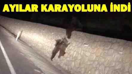 Ayı Ailesi Geyve Taraklı Yolunda Görüntülendi