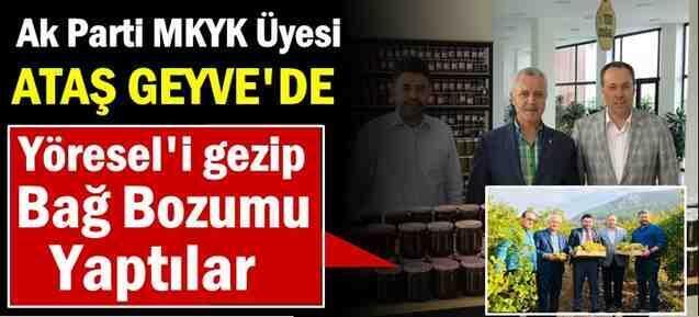 Ak parti MKYK Üyesi Ataş, Yöresel'i Gezip, Bağ Bozumu Yaptı
